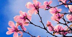 - Tavaszi feltöltődés (min. 2 éj)