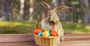 - Húsvét és tavaszi szünet (min. 3 éj)