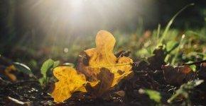 - Mesél az őszi erdő - hétvégi ajánlat az őszi hónapokra (min. 2 éj)
